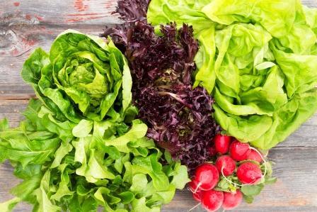 čerstvá zelenina - šaláty a reďkovky - neuveriteľne zdravé s minimom kalórií
