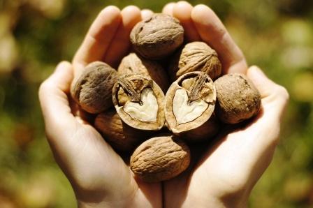 vlasske orechy v dlaniach